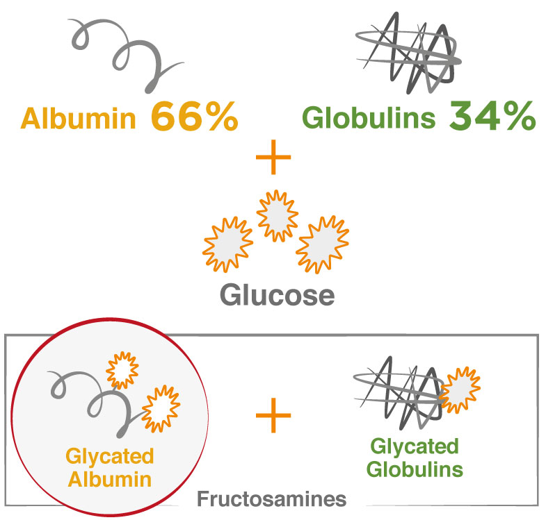 Glycated-Albumin-formula